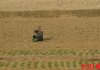 An elderly North Korean resident takes a brief rest while working on a farm in North Pyongan Province.
