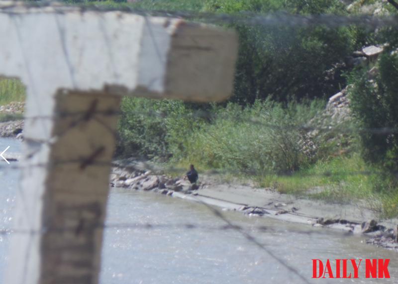 Barbed wire along the Sino-North Korea border.