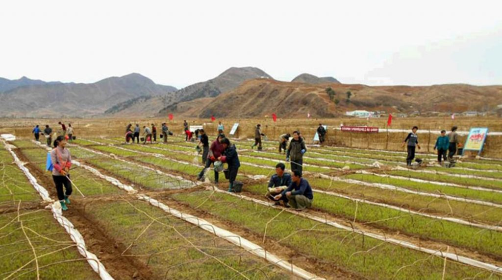 North Korean residents make rice-planting preparations