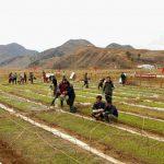 North Korean residents make rice-planting preparations