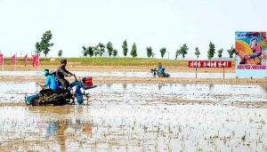 Rice planting in North Hwanghae Province