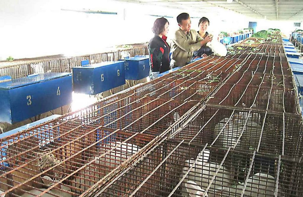 Chongjin Rabbit Breeding Stock Farm
