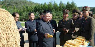 pyongyangites