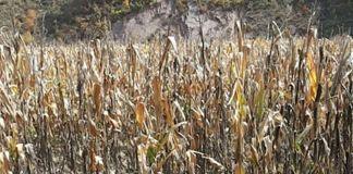북한 가뭄 피해