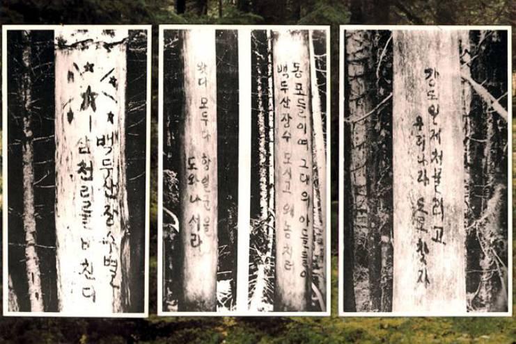 북한 구호나무