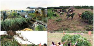 북한 풀베기 전투 현장. / 사진=아리랑메아리, 류경 홈페이지 캡처